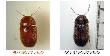 虫退治.COM / ニューセリコ タバコシバンムシ用フェロモントラップ ...